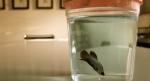 Titan-First Life Aquatic